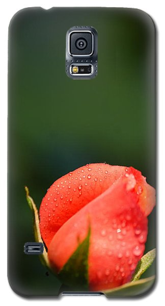 Coral Rose On Green Galaxy S5 Case by Debbie Karnes