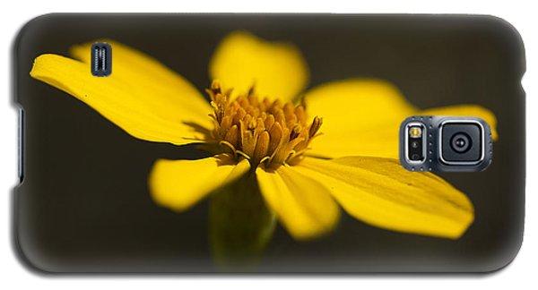 Coreopsis Verticillata Galaxy S5 Case