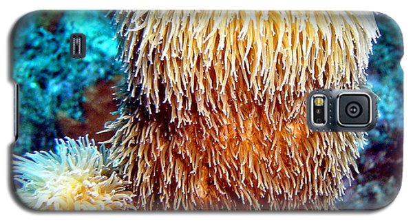 Galaxy S5 Case featuring the photograph Corky Sea Finger Coral - The Muppet Of The Deep by Amy McDaniel