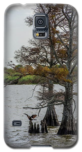Galaxy S5 Case featuring the photograph Cormorant by Paul Freidlund