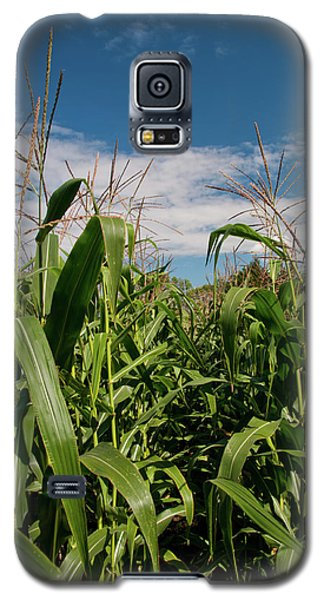 Galaxy S5 Case featuring the photograph Corn 2287 by Guy Whiteley