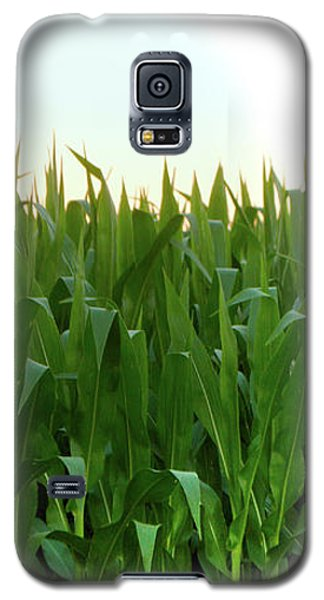 Corn Of July Galaxy S5 Case