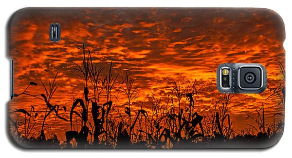 Corn Under A Fiery Sky Galaxy S5 Case by John Harding