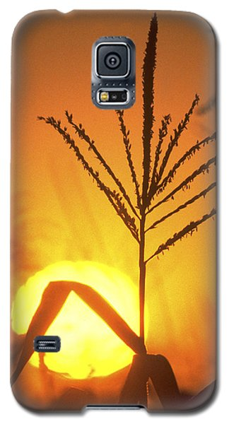 Cornfield Sunset Galaxy S5 Case