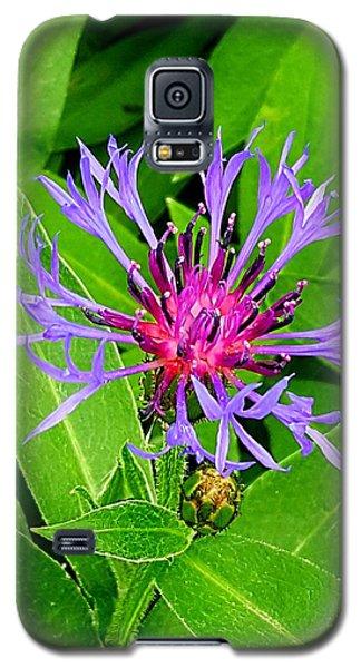 Centaurea Montana Galaxy S5 Case