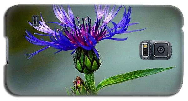 Cornflower Galaxy S5 Case by Rodney Campbell