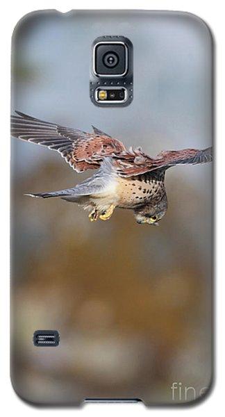 Galaxy S5 Case featuring the photograph Cornish Kestrel Hunting 2 by Nicholas Burningham