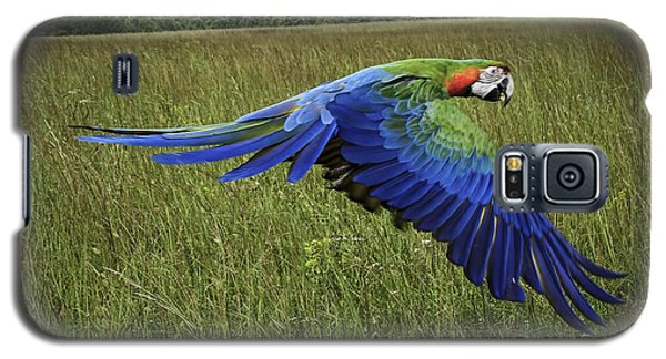 Cosmo In Flight Galaxy S5 Case by Melissa Messick