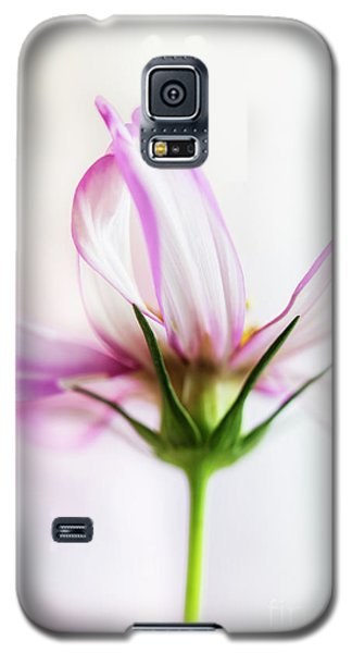 Galaxy S5 Case featuring the photograph Cosmos 6 by Elena Nosyreva