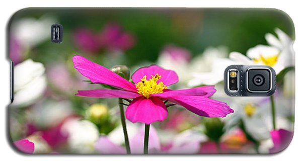 Galaxy S5 Case featuring the photograph Cosmos Flowers by Denise Pohl