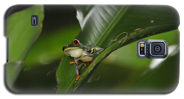 Costa Rica Red Eye Frog I Galaxy S5 Case