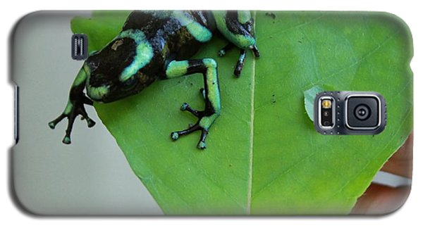 Costa Rican Poison Dart Frog Galaxy S5 Case