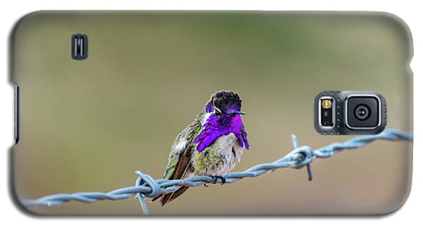 Costa's Hummingbird Galaxy S5 Case