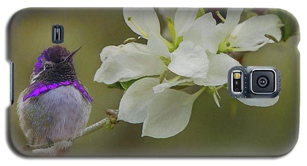 Costas Hummingbird On An Anacacho Orchid Branch Galaxy S5 Case