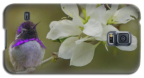 Costas Hummingbird On An Anacacho Orchid Branch Galaxy S5 Case