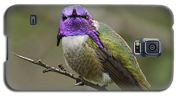 Costa's Hummingbird, Solano County California Galaxy S5 Case by Doug Herr