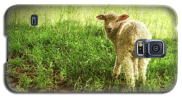 Cotswold Sheep Galaxy S5 Case