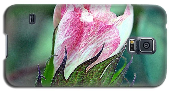 Galaxy S5 Case featuring the photograph Cotton Bloom by KayeCee Spain