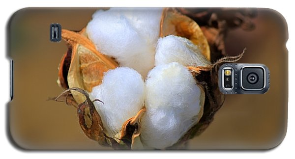 Cotton Boll Galaxy S5 Case