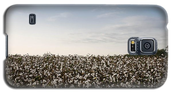 Cotton Field 2 Galaxy S5 Case
