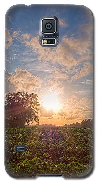 Cotton Field Sunset Galaxy S5 Case