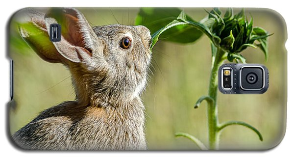 Cottontail Rabbit Eating A Sunflower Leaf Galaxy S5 Case