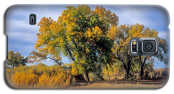 Cottonwood #1 Tree On Ranch Land In Colorado Fall Colors Galaxy S5 Case