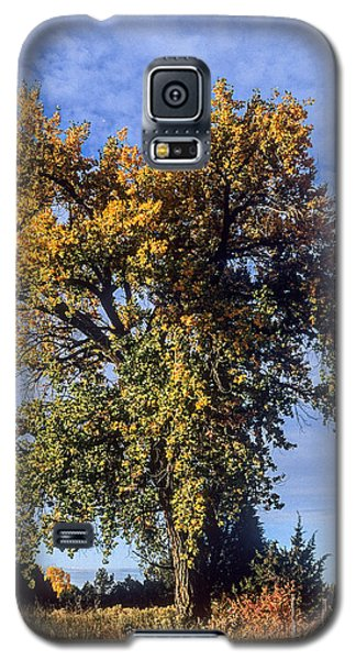 Cottonwood #3 Colorado Ranch Country In Fall Galaxy S5 Case