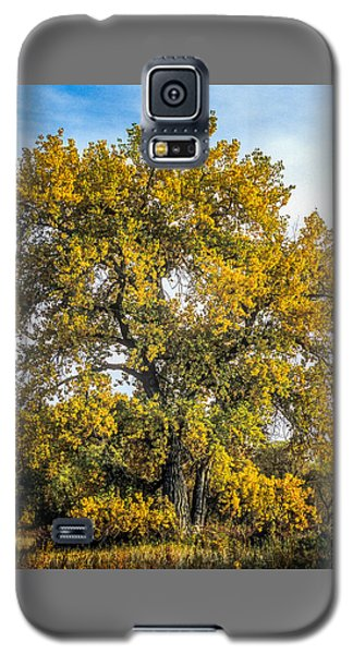 Cottonwood Tree # 12 In Fall Colors In Colorado Galaxy S5 Case
