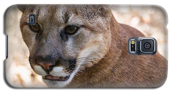 Cougar Portrait Galaxy S5 Case