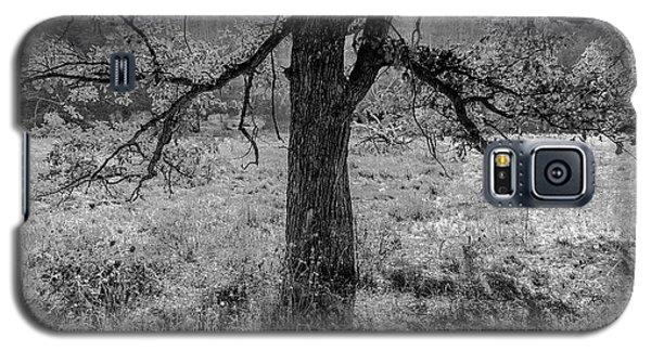 Coulee Oak Galaxy S5 Case