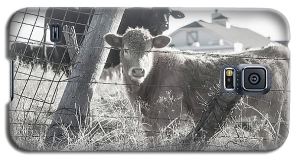 Country Living For These Cows Galaxy S5 Case by Toni Hopper