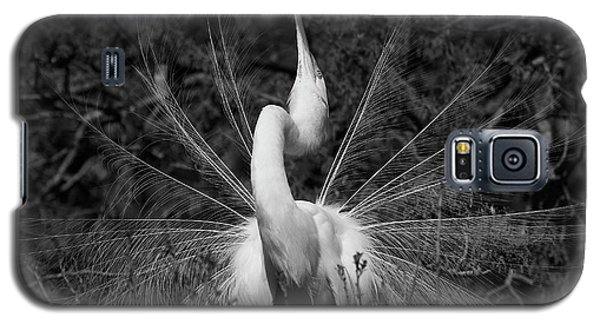 Great Egret Courtship Plumes Galaxy S5 Case