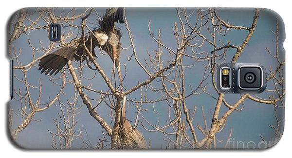 Galaxy S5 Case featuring the photograph Courtship Ritual Of The Great Blue Heron by David Bearden