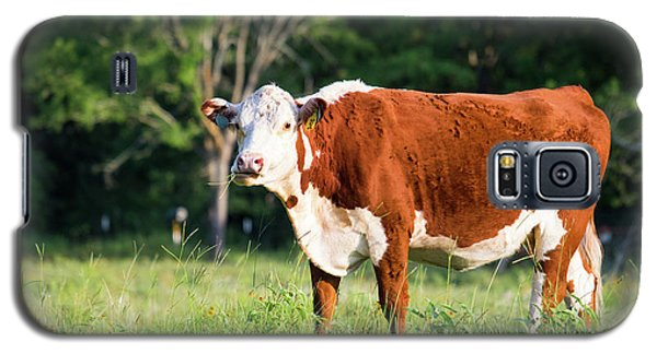 Cow #1 Galaxy S5 Case