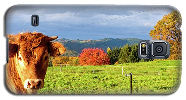 Cow And Autumn Colors  Galaxy S5 Case