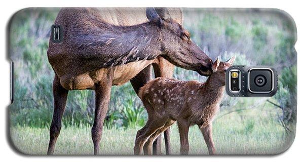 Cow And Calf Elk Galaxy S5 Case