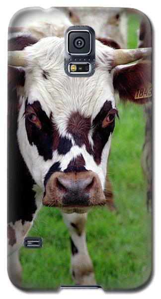 Cow Closeup Galaxy S5 Case