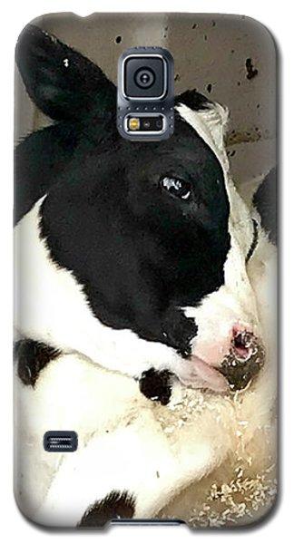 Cow Cutie Galaxy S5 Case
