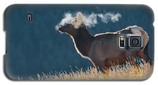 Cow Elk With Steamy Breath Galaxy S5 Case