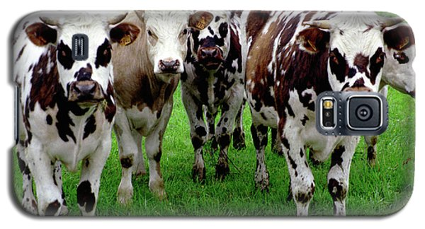 Cow Group Galaxy S5 Case