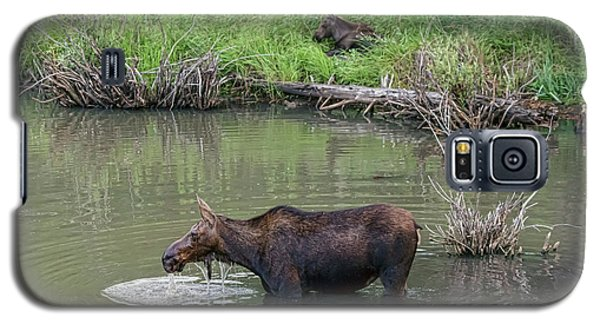 Galaxy S5 Case featuring the photograph Cow Moose And Calf by James BO Insogna