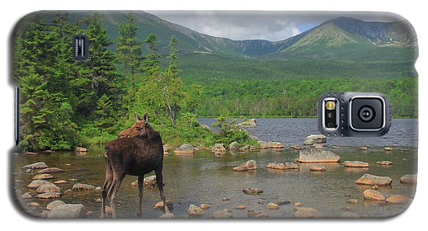 Cow Moose Looking Back At Sandy Stream Pond Galaxy S5 Case by John Burk