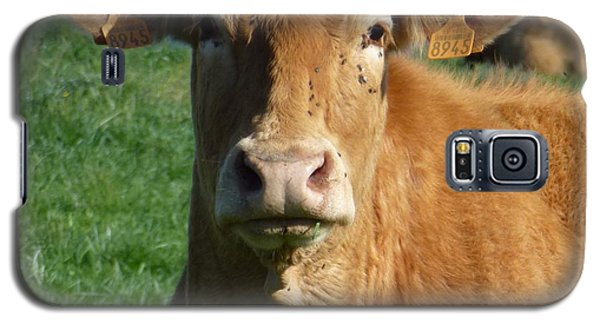 Cow Portrait Galaxy S5 Case by Jean Bernard Roussilhe
