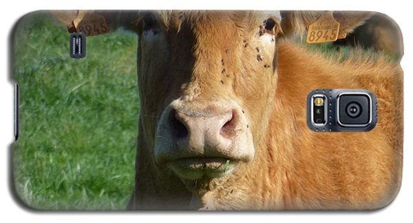 Cow Portrait Galaxy S5 Case