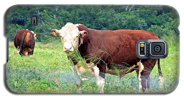 Galaxy S5 Case featuring the painting Cow Today by Angela Annas