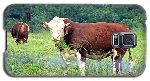 Cow Today Galaxy S5 Case by Angela Annas