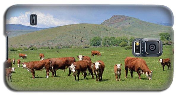 Cows And Calves Galaxy S5 Case