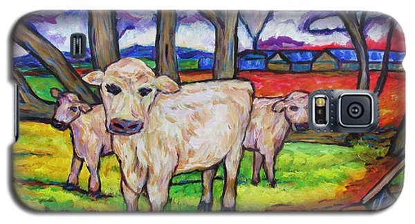 Cows And Fallen Gum Trees Galaxy S5 Case by Dianne  Connolly