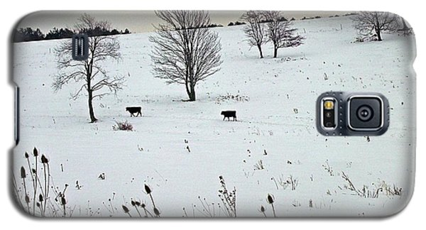Cows And Thistles Galaxy S5 Case